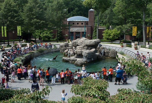 The sea lion enclosure is one of the first exhibits you'll see! Photo by Julie Larsen Maher for WCS