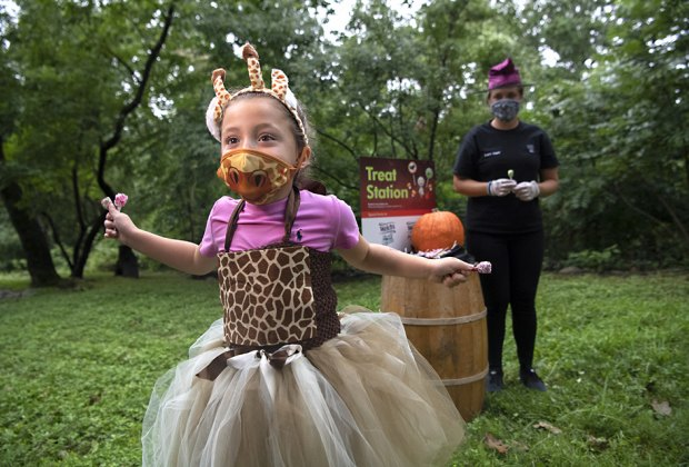 Halloween Nyc Events 2020 Toddlers Boo at the Zoo Returns to Bronx Zoo for 2020 Halloween Season