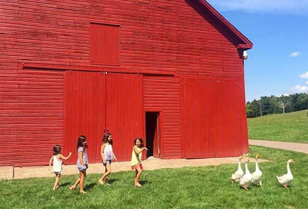 kids near a barn with geese