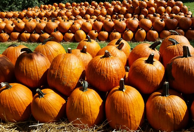Gorgeous pumpkins await at Kroll's Fall Harvest Farm. Photo courtesy of  Tyler and Dylan Kroll