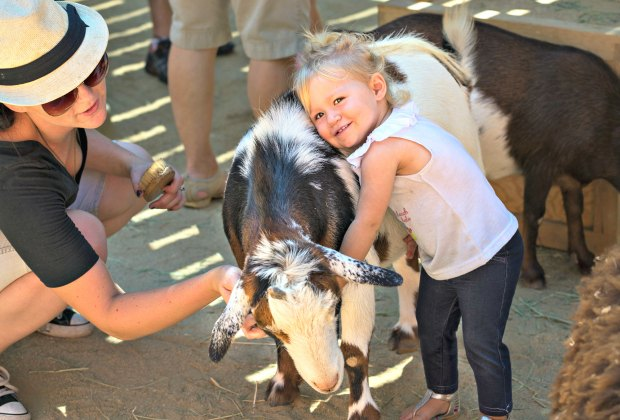Best Petting Zoos around LA Where Kids Can Get Their Animal