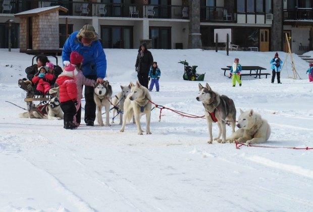 dog sledding lake placid