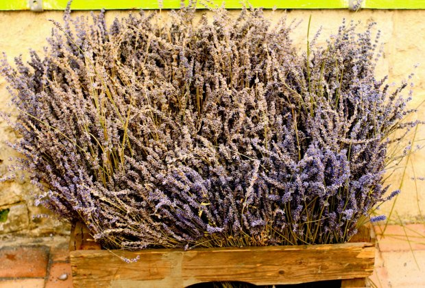 The whole region smells of lavender