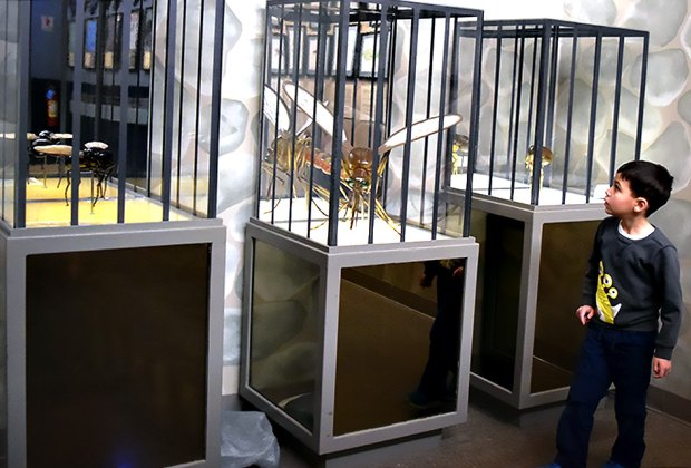 """The numerous exhibits at Insectropolis include Rock State Prison, where disease-spreading insects are kept in """"solitary confinement."""""""