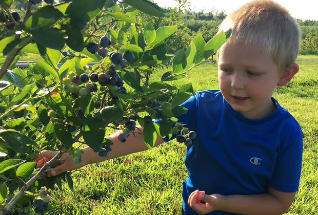 Berry Farms on Long Island for Picking Your Own Blueberries