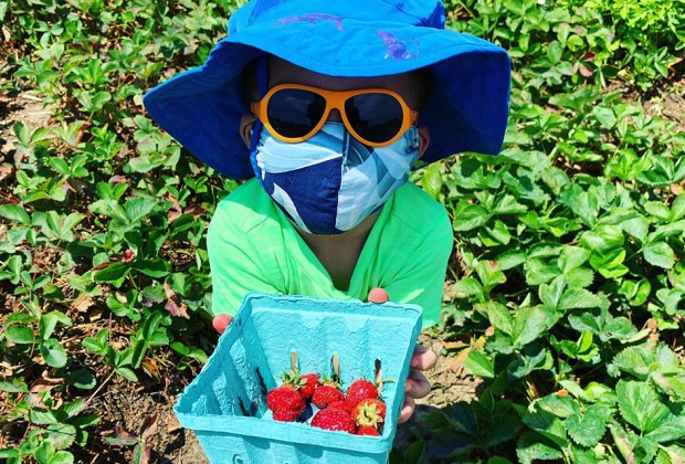 Child in field holding strawberries