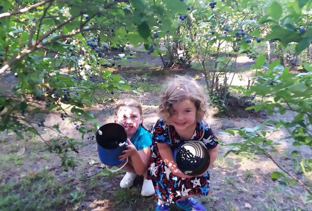 Kids hold buckets of blueberries at Lindsay's Farm