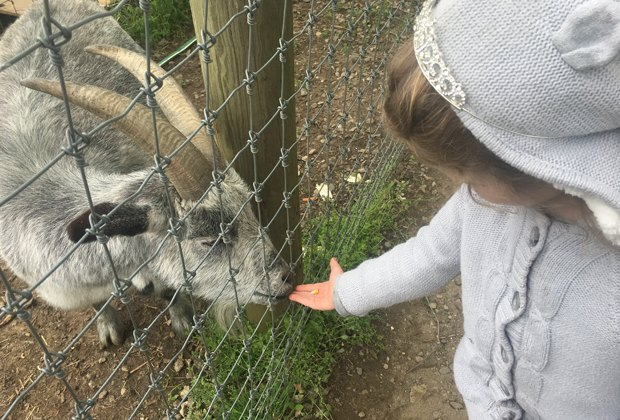 Meet the Animals: 6 Great Animal Farms and Petting Zoos near