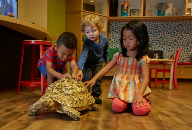 Get up close to the wildlife at the Academy of Natural Sciences at Drexel University