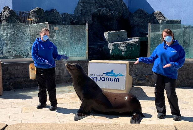 Trainers with the a Sea Lion at the Long Island Aquarium What's open Now Long Island