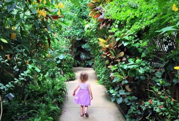 Are we in the tropics? It's warm and inviting at the Magic Wings Butterfly Conservatory in Massachusetts. Photo courtesy of Katie Wadland