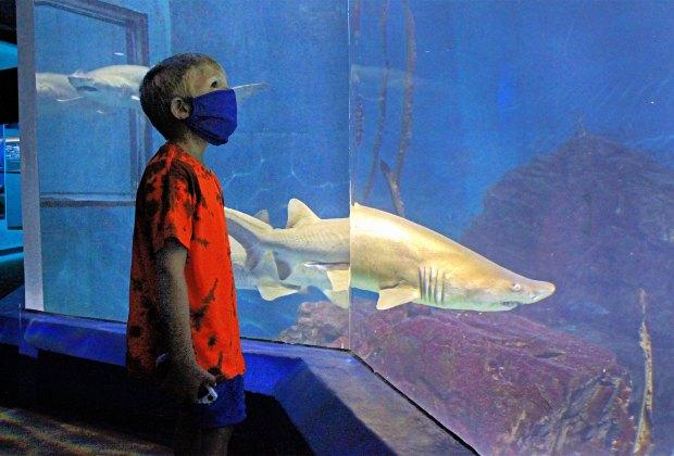 Maritime Aquarium shark tank