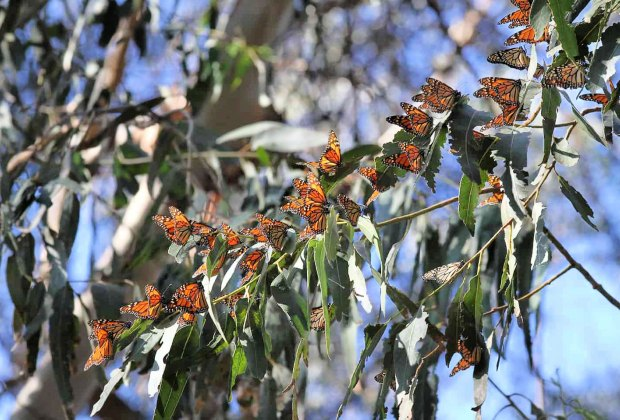 Road Trip on the PCH: Monarch Grove