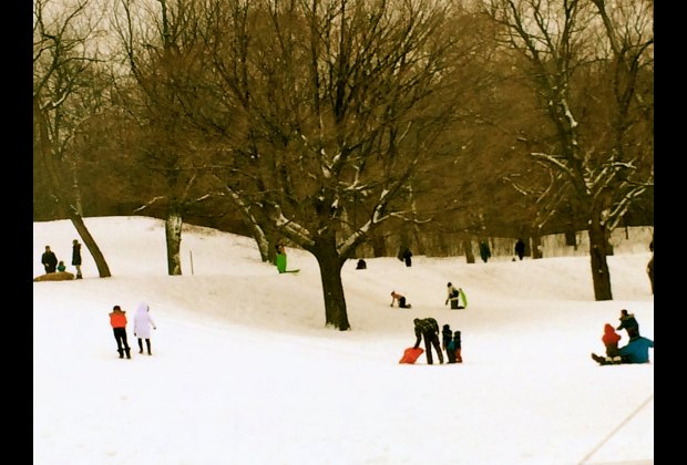 Sledding in Mont Royal Park