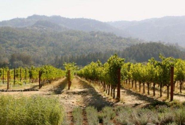 Gorgeous Napa Valley vineyard scenery