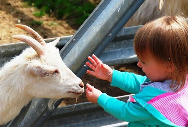 Baby animals are spring break companions at Alstede Farms
