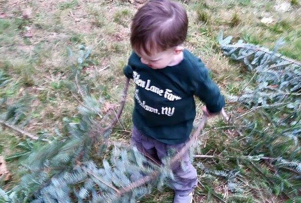 Cut-Your-Own Christmas Tree Farms On Long Island