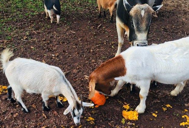 animals at Noah's ark animal sanctuary