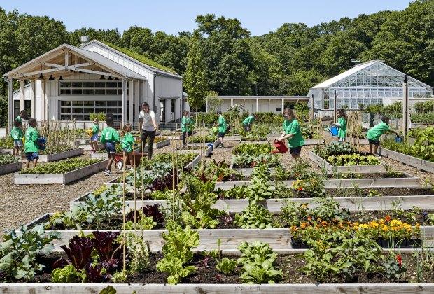 Explore the gardens of NYBG's Edible Academy