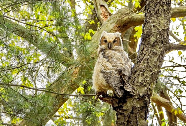 12 Great Places To Hike with Kids around Boston: Habitat Wildlife Sanctuary