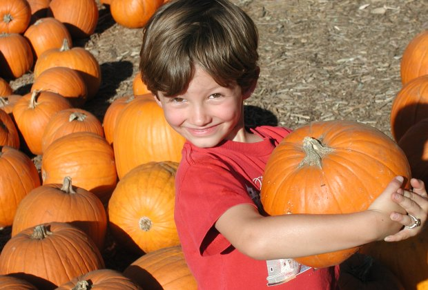 Boy holding a pumpkin at Palisades Pumpkin Patch