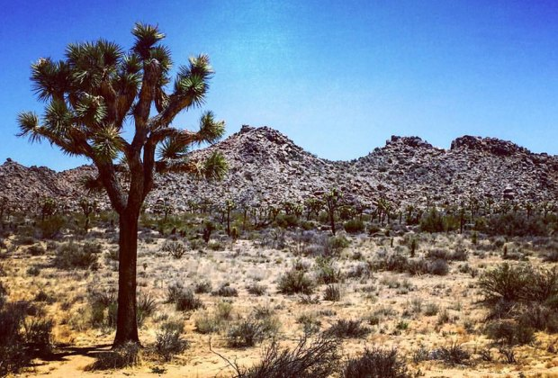 The awe-inspiring  Joshua Tree National Park is a just trip from Palm Springs. Photo by Susan Dibblee Blender