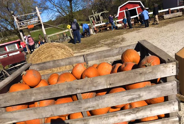 Best Pumpkin Patches For Kids Near Chicago Mommypoppins Things To Do In Chicago With Kids