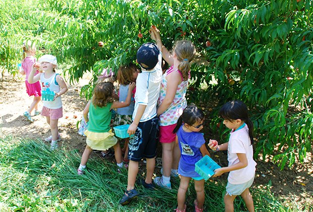 Kids pick peaches at Alstede Farms