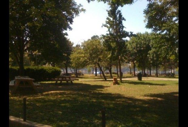 Shady picnic tables