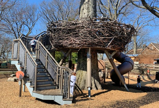 Climb into the fantastic bird's nest at the Children's Zoo section of Franklin Park Zoo