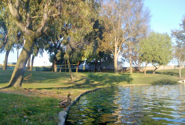 The Best Parks in LA Where Kids Can Run and Play: Polliwog Park
