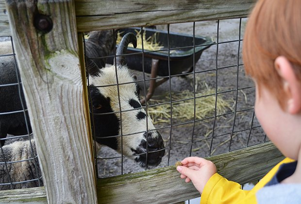 Kids feed goats at the Queens Zoo