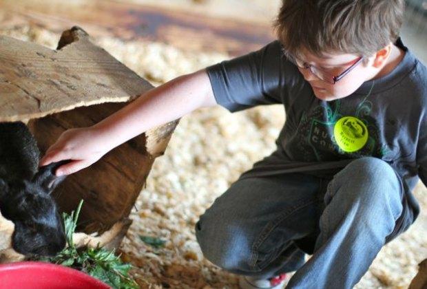 Petting the bunnies at Retreat Petting Farm