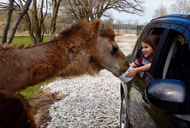 Day Trips near Chicago for Kids: Safari Lake Geneva