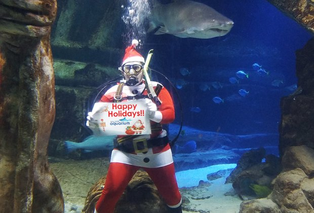 safe santa visits long island aquarium scuba santa