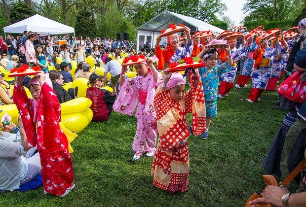 The Brooklyn Botanic Garden's Sakura Matsuri celebrates Japanese culture with a rich program of events. Photo by Julie Markes