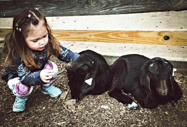 The Best Animal Farms And Petting Zoos On Long Island