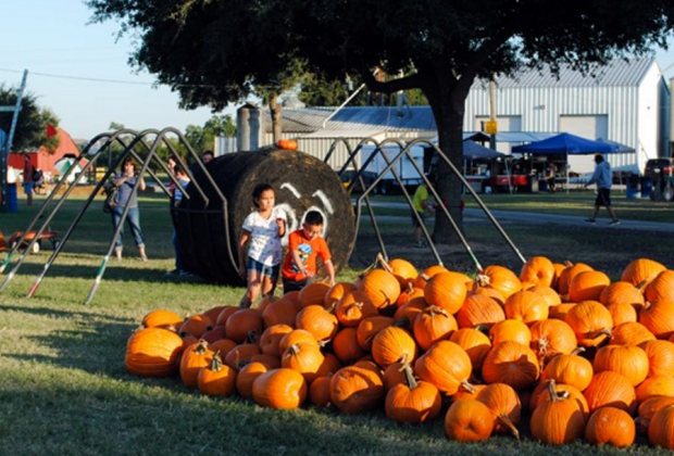 Pumpkin Patch at Old Time Christmas Tree Farm | MommyPoppins ...