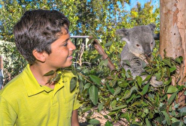 Photo courtesy of San Diego Zoo