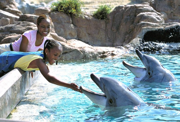 Things To Do With LA Kids Over Spring Break: Meet Dolphins at SeaWorld