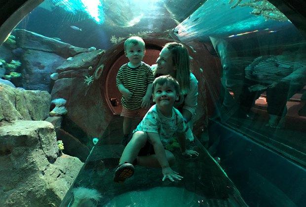 See the sharks at the New York Aquarium