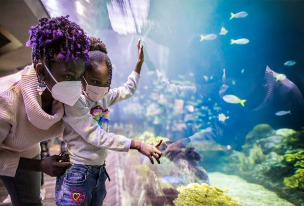 Things To Do with Chicago Kids Over Spring Break: Shedd Aquarium