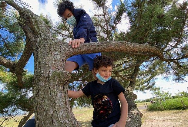Two boys climb a tree