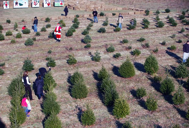 Cut Your Own Christmas Tree Farms Near NYC | Mommy Poppins - Things To Do in New York City with Kids