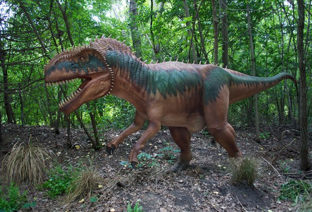 See a megalosaurus in the wild!