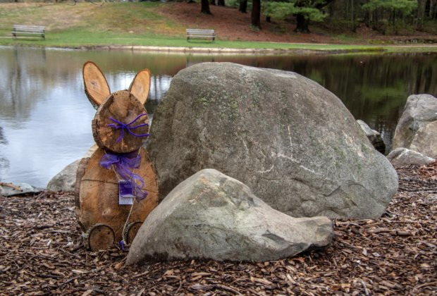 The bunnies are still out and about in Walpole Park. Photo courtesy of Wayne Fitzpatrick