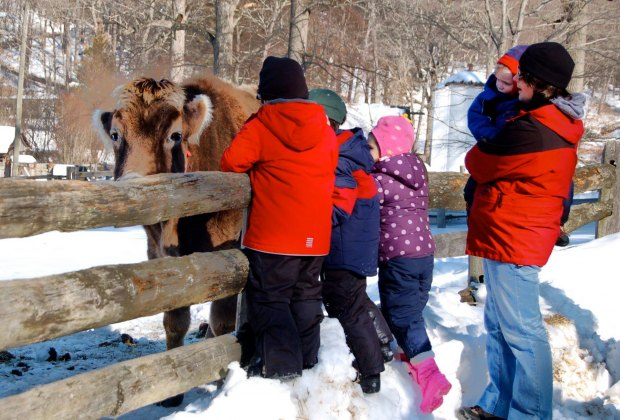 Pet the animals. The cows don't mind the cold—or some love pats—this winter. Stamford Museum and Nature Center