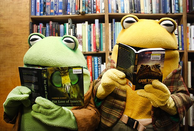 Frog & Toad visit the Strand's storytime.