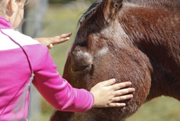 Terhune Orchards is home to friendly horses