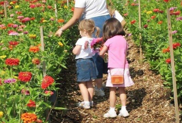 Girls picking zinnias at Terhune Orchards